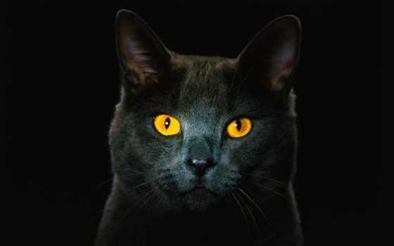 kot, глазами, чёрный