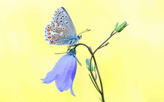 hoa, бабочка, hương, yellow, hành, страница,