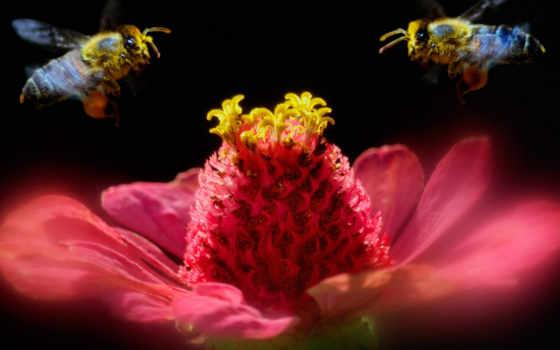 насекомое, красивые, природы, животных, страница,