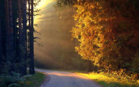paisajes, rboles, luz, del, naturaleza, caminos, bosques, сол, sombra, otoño,