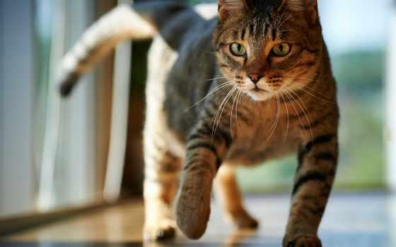 кот, ходит, how, если, лотка, кошек, нужду, поднос, animal,