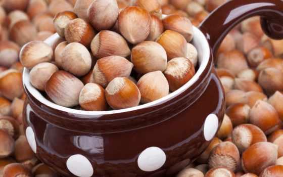 орехи, полезные, самые, организма, полезных, лесные, орехов, вред, использование, фундук, веществ,
