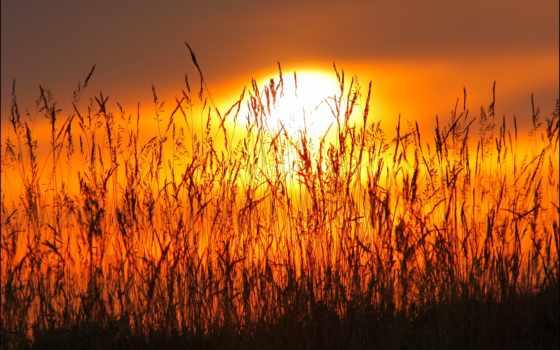 закаты, природа, осень, макро, sun, закат,