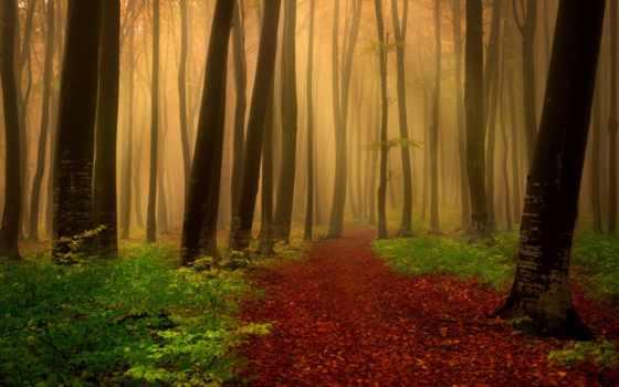 лес, has