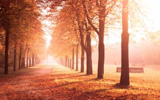 листья, осень, деревья