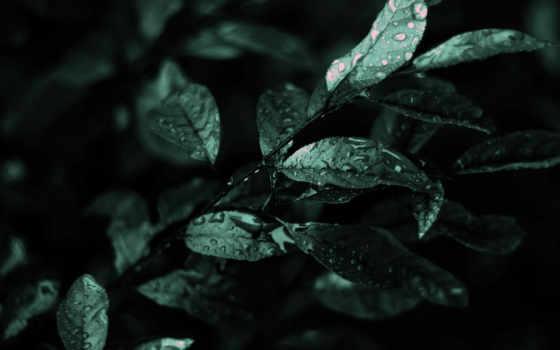 листва, мокрая, дождя