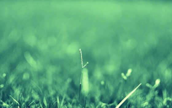 трава, макро, растения