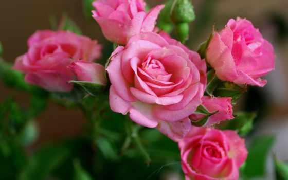 стих, тебя, люблю, кб, без, уже, мне, любви, может, за, только,