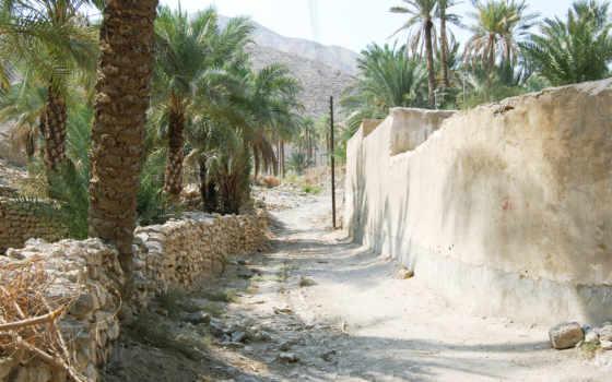 пальмы, season, summer, деревня, famous, фото, desktop,