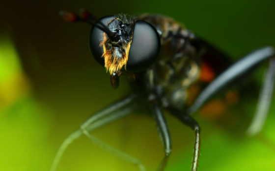 макро, размеры, насекомое, оригинал, file, cb, animals, hornet, fauna