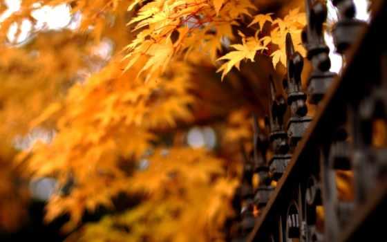 осень, листья, природа Фон № 57215 разрешение 1920x1080