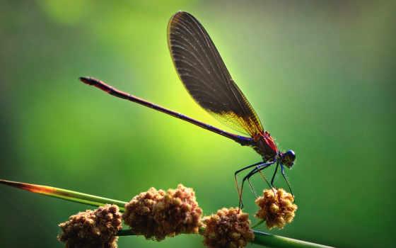 макро, насекомые, вас
