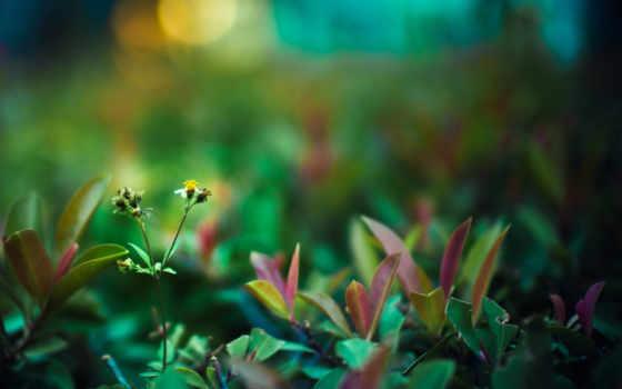 life, высокое, зелёный