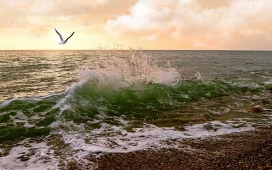 небо, море, surf, чайка, waves,