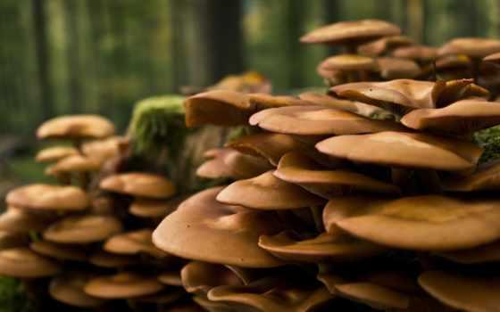 грибы, растут, дерева, деревьях, мох,