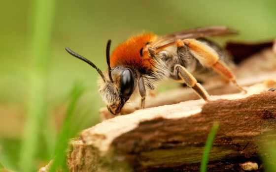 les, макро, трава, coléoptères, insectes, пчелка, pinterest,