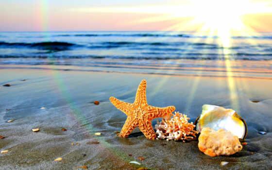 природа, пляж, summer, summertime