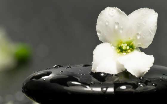 цветок, камень