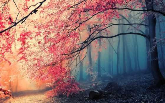 лес, осень Фон № 33638 разрешение 1680x1050