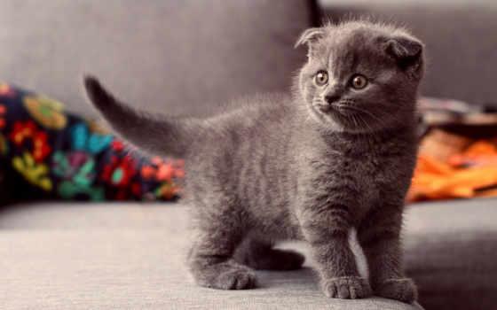 кот, котенок, свет