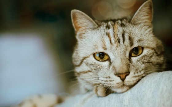 кошки, кошек, кот Фон № 162154 разрешение 1920x1200