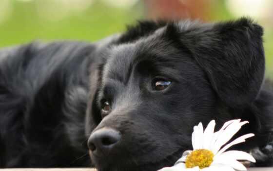 клиники, друзьям, ветеринарные