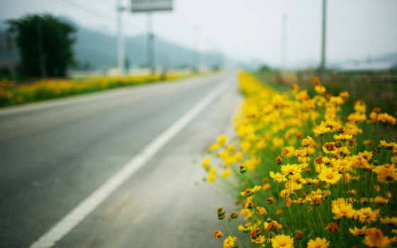 цветы, желтые, макро, roadside, дорога,