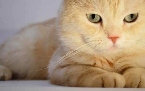 кот, zhivotnye, свет