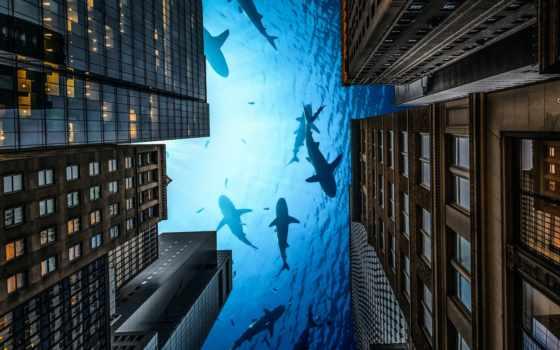 loading, denigmo, free, mobile, goodfon, город, акула, desktop,