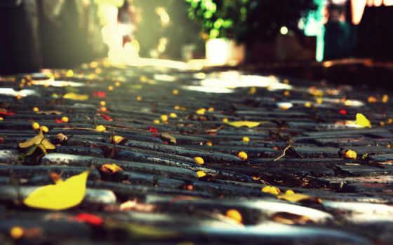 осень, качестве, осени, хорошем, город, листва, камни, брущатка, лист, легенды, высоком,