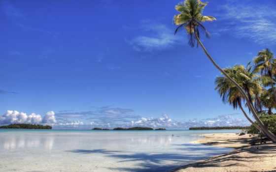 пальмы, пляж, заставки, landscape, картинку, телефон,