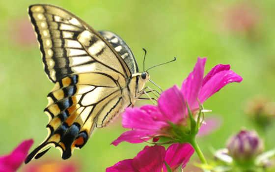 бабочка, бабочки, цветке, макро, you, красивая,