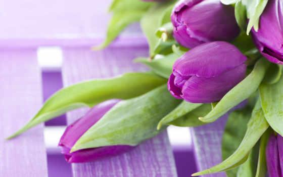 цветы, телефон, пароль