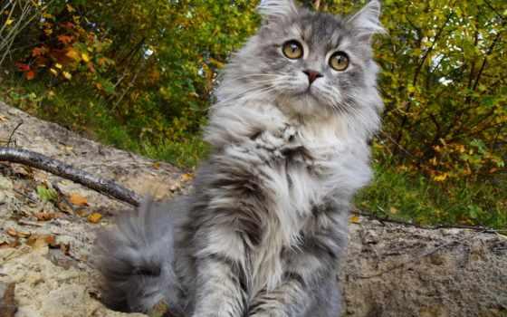 фильмы, cats, лес