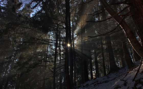 природа, лес, rays, горы, установить,