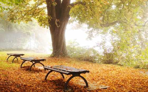 осень, park, природа, листва, промокшая, garden, скамейка, лавки,