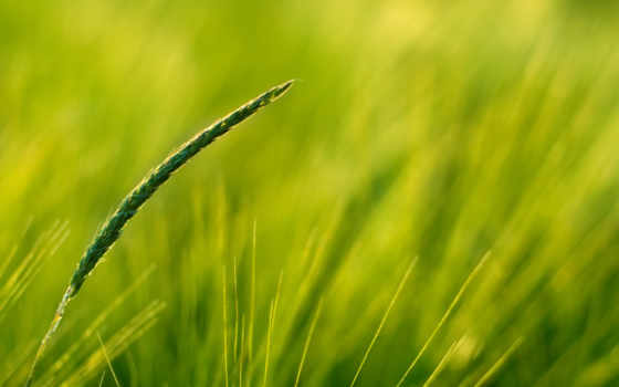 трава, природа, closeup