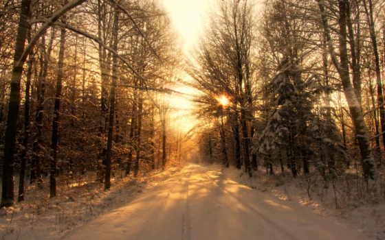 winter, закат, лесу, лес, стоит, убранстве, праздничном,