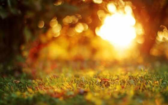листва, боке, trees, трава, размытость, вечер, закат, природа, осень,