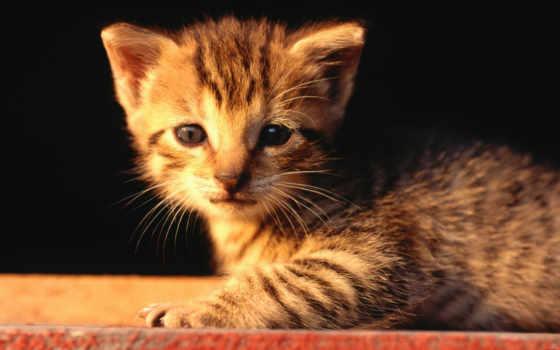 прикольные, янв, cats