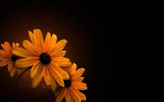 fone, cvety, черном, оранжевые, желтые,