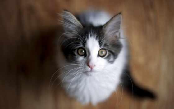 котенок, смотреть, кот, cute