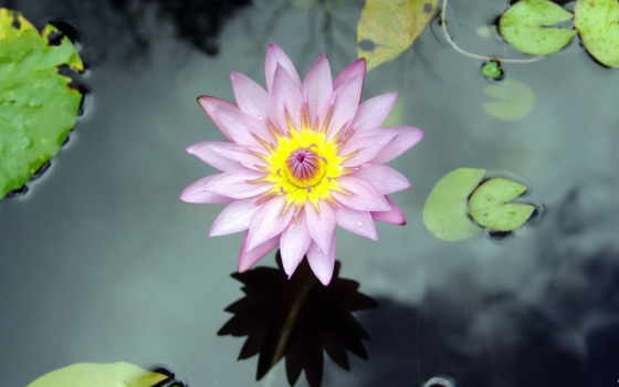 flower, image