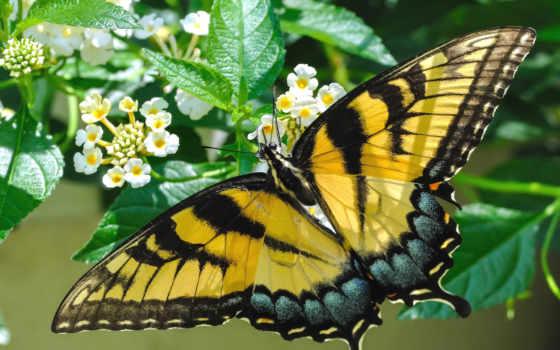 you, бабочка, первую