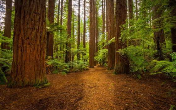 лес, природа, monochrome, trees, природы, white,