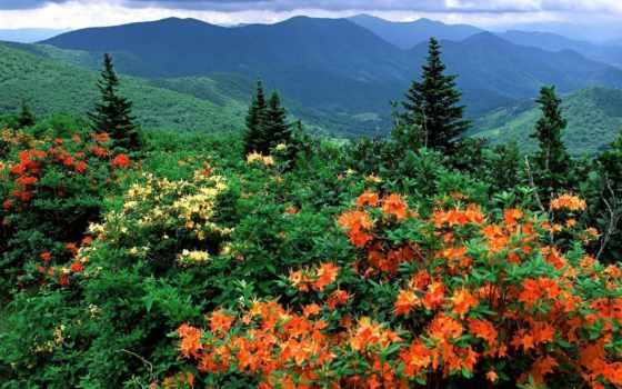 carolina, северная, north, state, azalea, тропе, сша, аппалачской, цветущая, appalachian,