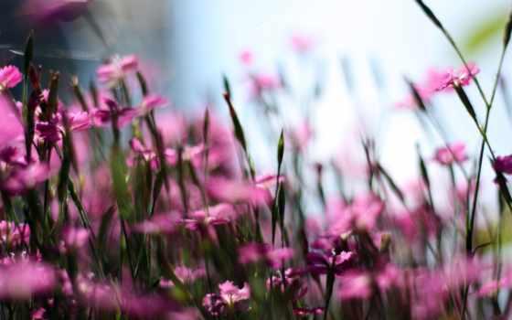 полевые, cvety, поле, размытость, цветы,