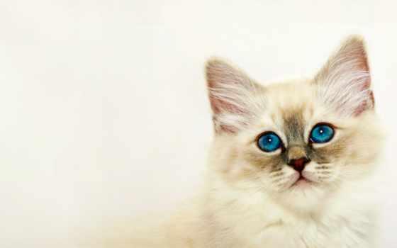 need, скорость, картинки, cats, pictures, views, страница, кот, фотоприколы,