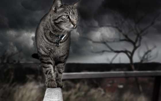 , забор, кот, photoshop, art