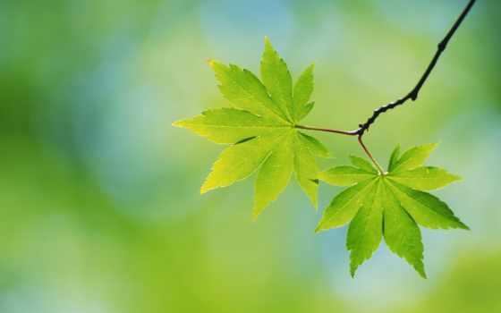 листва, дерево, анимация, зелёный, смайл, листьев, трава, гифка, аватар